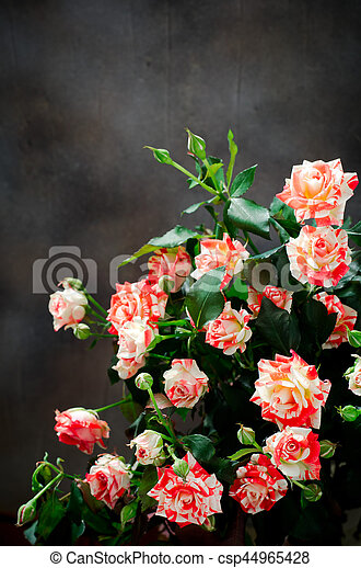 tiger gestreifte rose