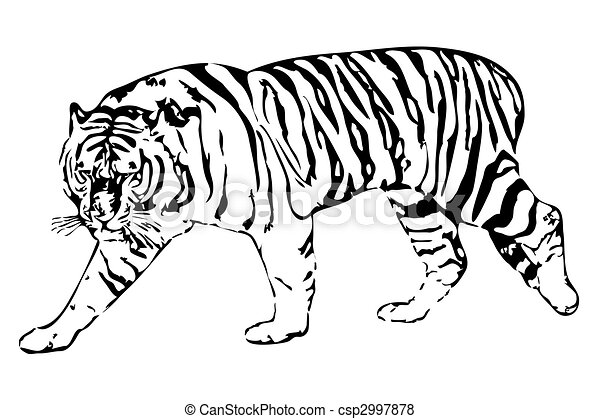 Tiger Vector Illustration Of The White Tiger On A White Background