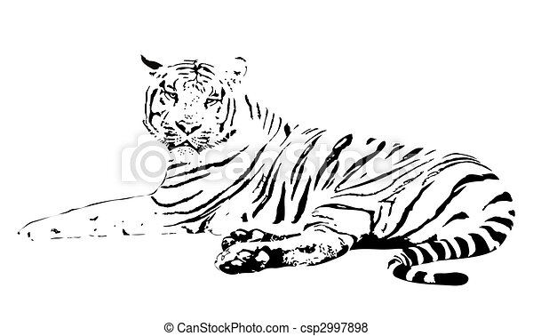 Tiger - csp2997898