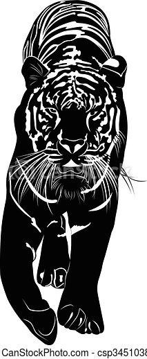 tiger - csp34510380