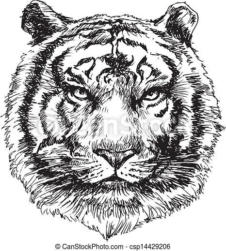 tiger head hand drawn - csp14429206