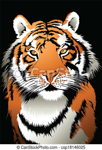Tiger - csp18146025