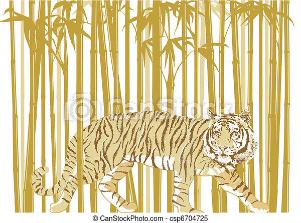 Tiger in Bamboo Forest - csp6704725