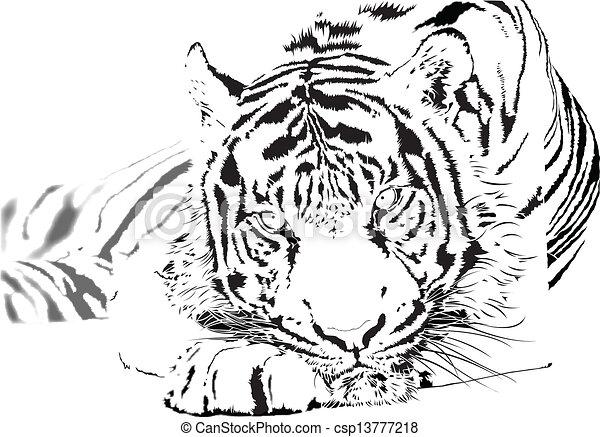 tiger - csp13777218