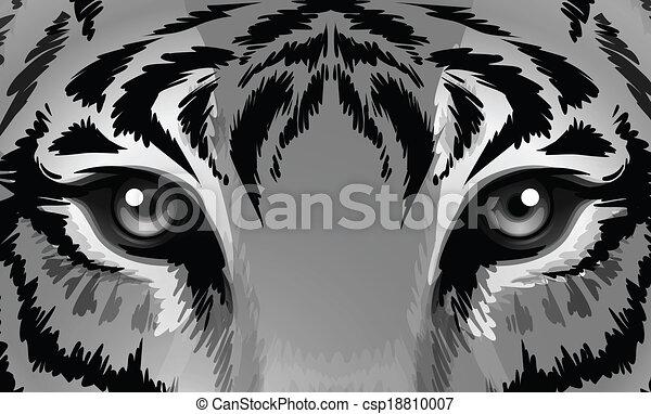 Un tigre con ojos afilados - csp18810007
