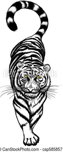 Tigre blanco y negro agachado - csp5858571