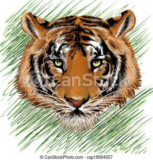 El sketch del tigre - csp18904557