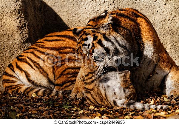 Mamá tigre - csp42449936