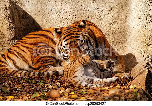 Mamá tigre - csp20393427