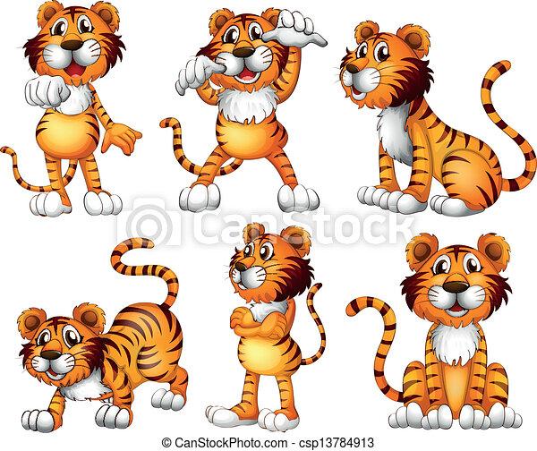 tigre, positions, six - csp13784913