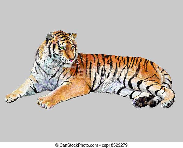 Tigre, realista, dibujo, ilustración. Coloreado, aislado ...