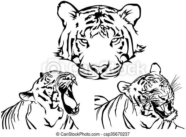 Tatuaje Tigre Tribal tigre, tatuaje, dibujos. tatuaje, -, tigre, vector, negro, dibujos