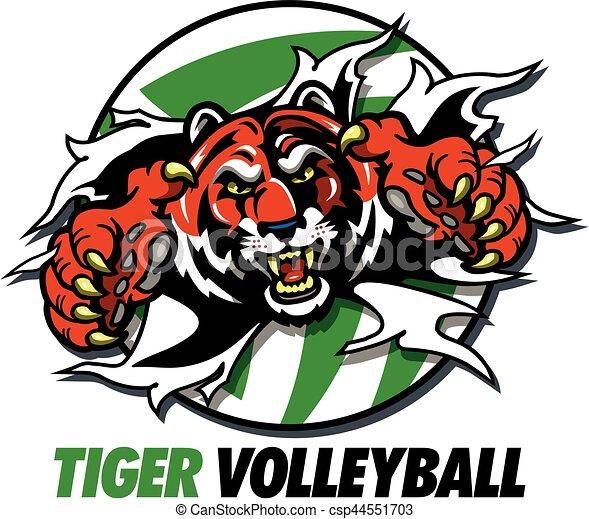 Voleibol tigre - csp44551703