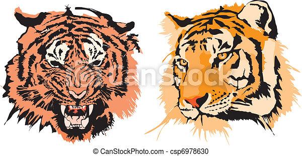 Dos tigres - csp6978630