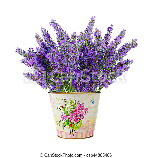 Tin Vase With Lavender Flowers Isolated On White Background