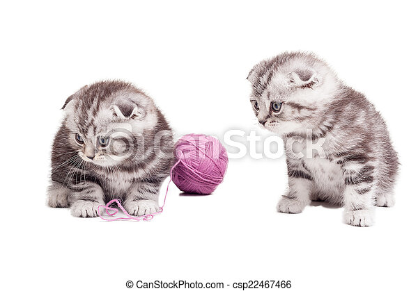 Tiny cuties. Two cute Scottish fold kittens sitting near the woolen tangle and looking away - csp22467466