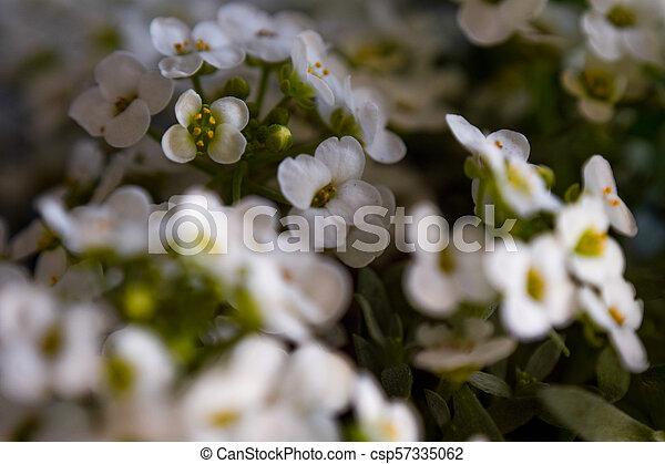 Tiny flowers small white flowers tiny flowers csp57335062 mightylinksfo