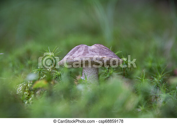 Tiny Forest Mushrooms - csp68859178