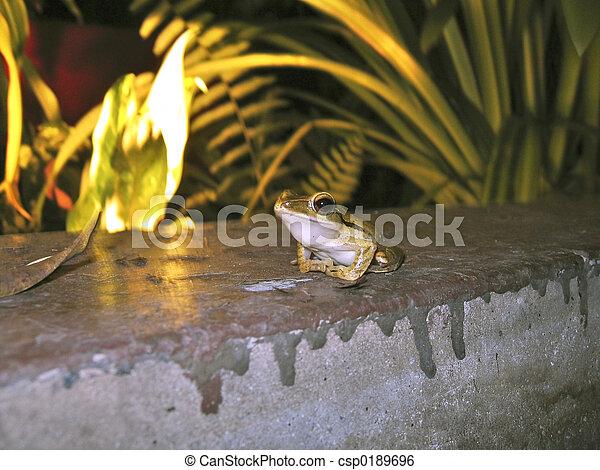 Tiny Froggy - csp0189696