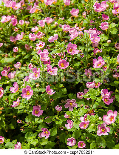 Tiny pink flowers in a basket basket of small pink flowers in bloom tiny pink flowers in a basket csp47032211 mightylinksfo