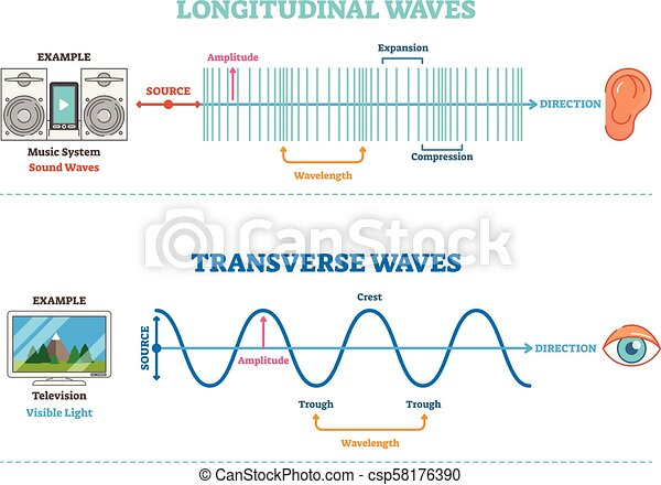 tipo, diagram., longitudinal, científico, sonic, ilustração, onda, principle., visual, vetorial, percepção, transversal - csp58176390
