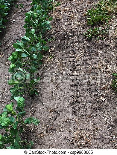Tire track in arid earth near soybean row. - csp9988665
