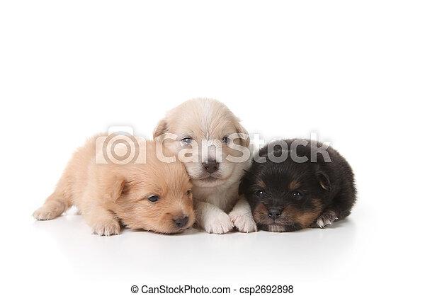 Tired Sweet and Cuddly Newborn Puppies - csp2692898
