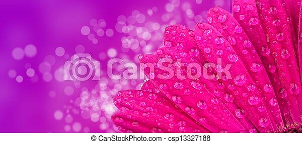 Una foto de Macro de la flor de gerber con un brillante fondo borroso, baja profundidad de foco - csp13327188