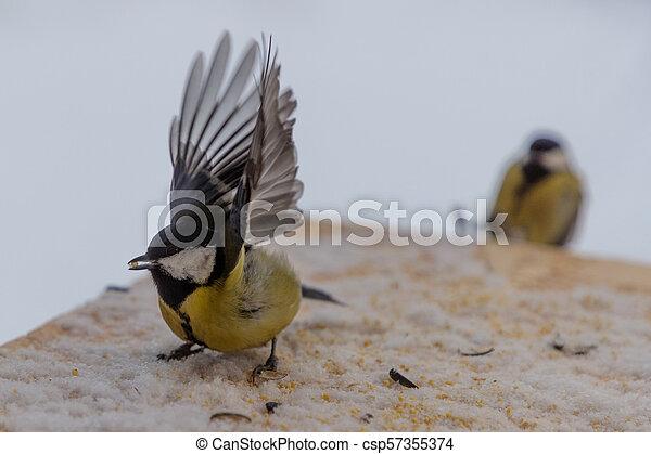 Tit bird on the bird feeder in winter - csp57355374