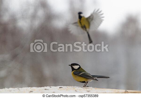 Tit bird on the bird feeder in winter - csp57355389