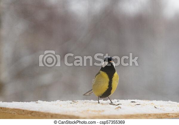 Tit bird on the bird feeder in winter - csp57355369
