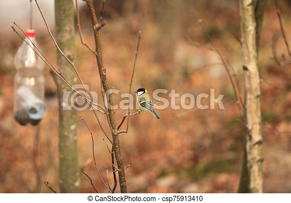 tit bird sits on a branch - csp75913410