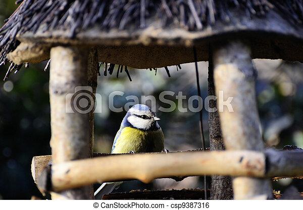 Tit in the bird feeder - csp9387316