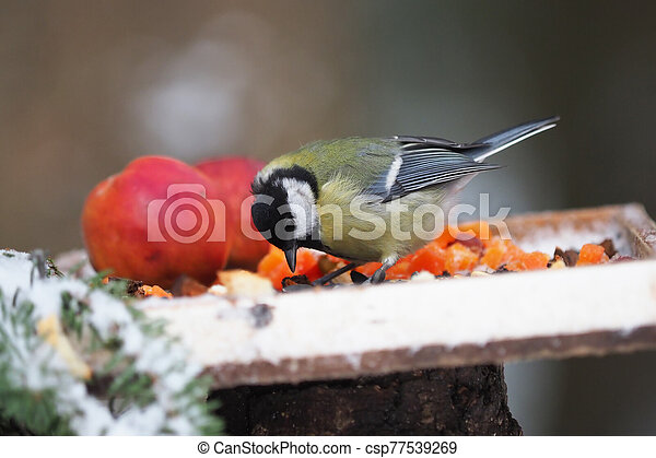 tit on a feeding trough in the forest - csp77539269