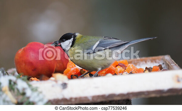 tit on a feeding trough in the forest - csp77539246