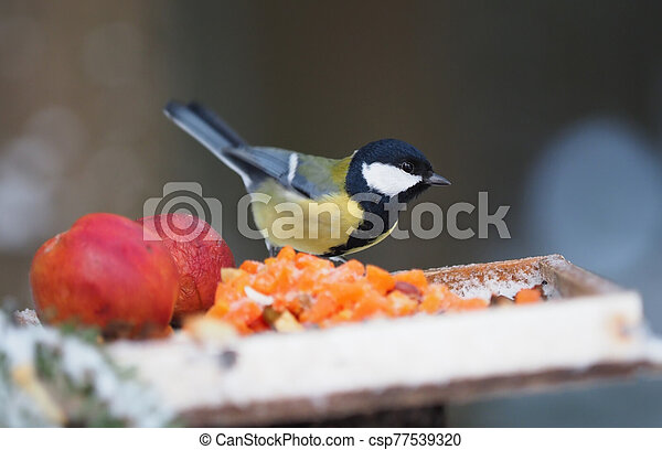 tit on a feeding trough in the forest - csp77539320