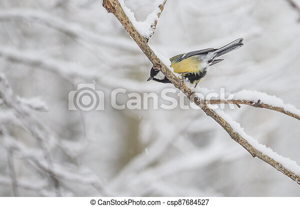 tit on the branch. winter - csp87684527