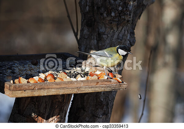Tit on the trough - csp33359413