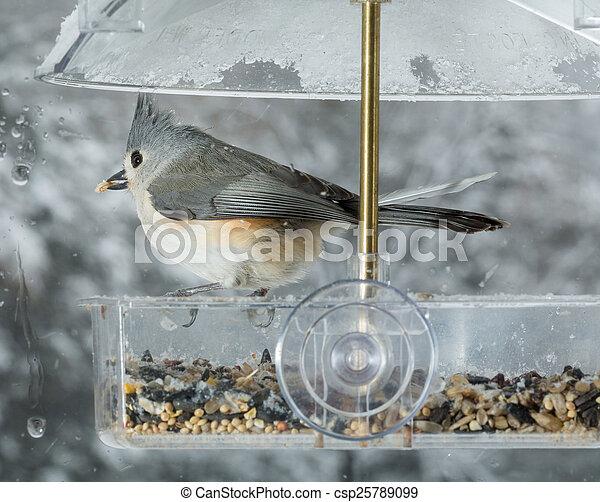 Tufted Titmouse en el alimentador de aves de ventana - csp25789099