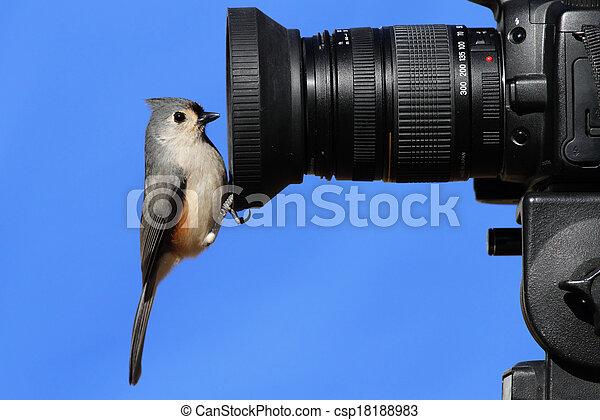 Titmouse en una cámara - csp18188983