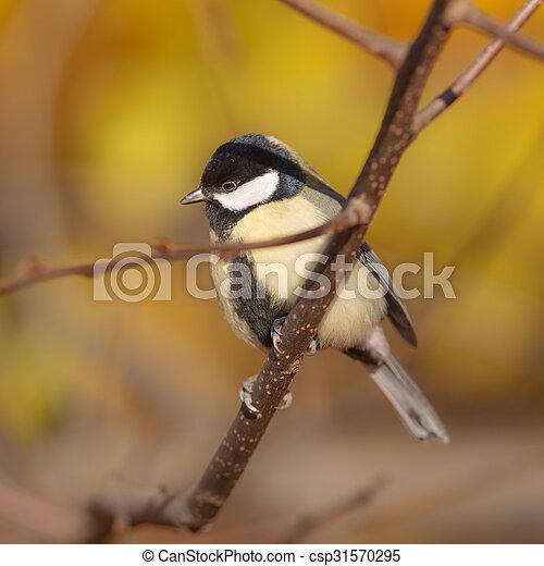 titmouse in autumn - csp31570295