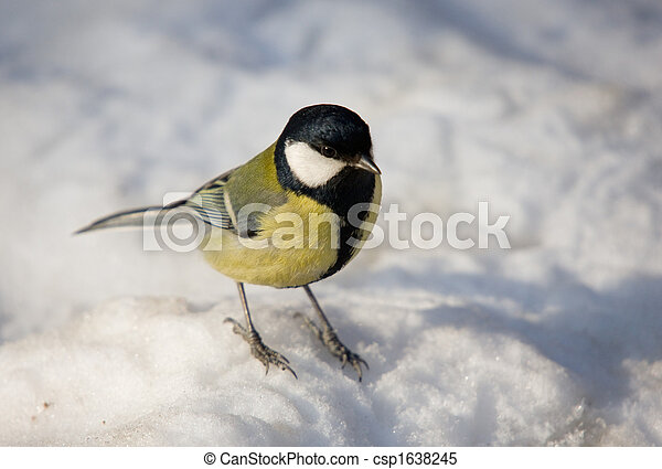 Titmouse in the winter - csp1638245