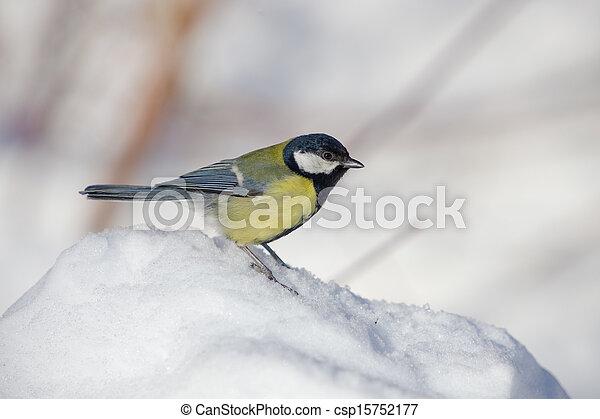 titmouse on snow close up - csp15752177