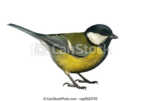 Un pájaro titmouse, aislado en blanco - csp0523755