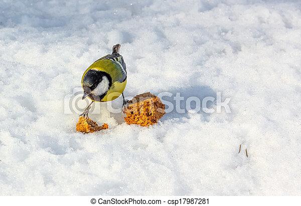 Titmouse winter - csp17987281