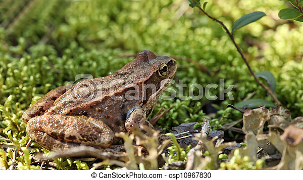 toad sitting in the grass - csp10967830