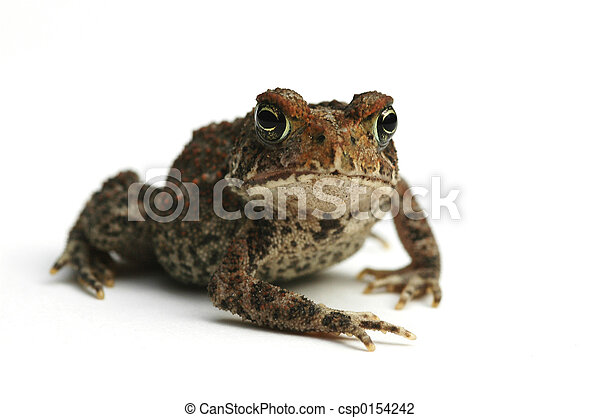 Toad - csp0154242