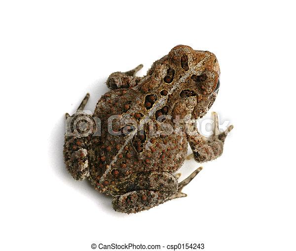 Toad - csp0154243