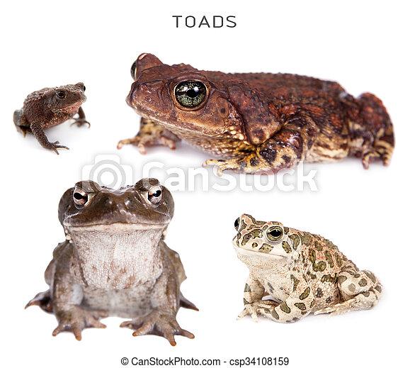 Toads set on white - csp34108159