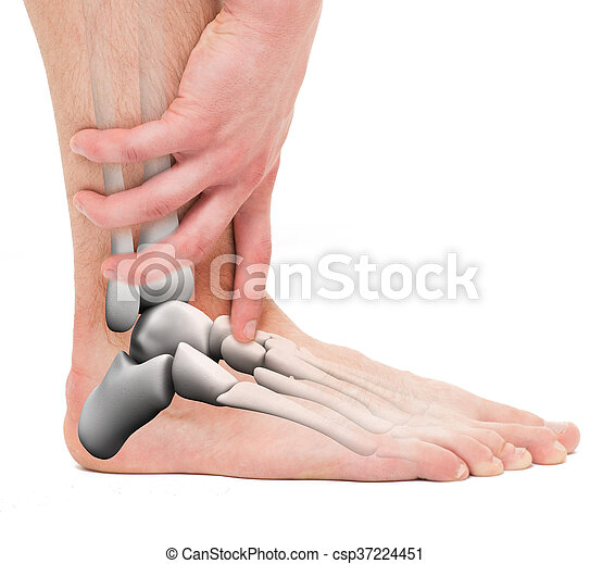 Tobillo, huesos, macho, -, anatomía.